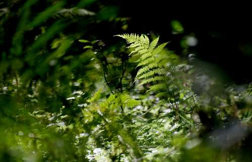 Fern Forest Nature Green Plant Forest Floor Flora