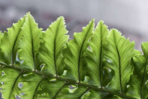 Fern Leaves Plant