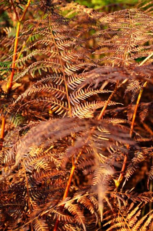 Fern Forest Fall Nature Vintage
