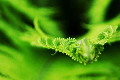 Fern Bracken Nature Male Fern