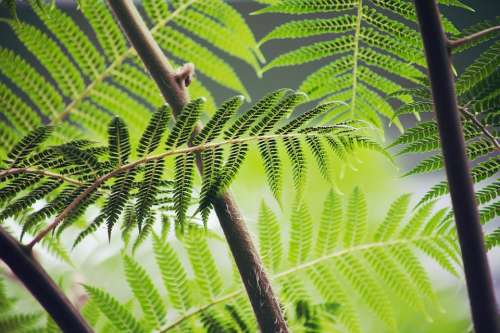 Fern Brake Plant Green Forest Leaf Flora Bright