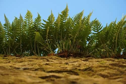 Ferns Nature Plants Wall Vegetation