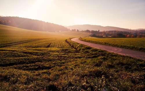Field Grass Winding Road Sunset Nature Landscape
