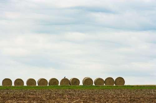 Field Straw Hay Harvest Summer Landscape Nature