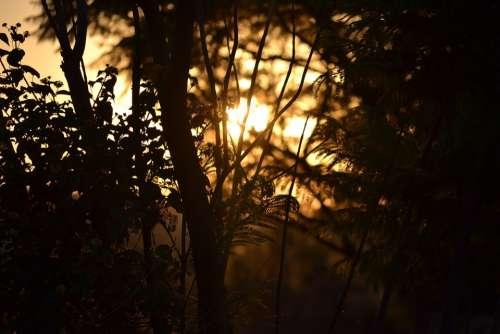 Field Sunset Trees Golden Sunlight Meadow Grass
