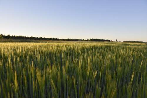 Fields Landscape Nature Sky Field Panorama