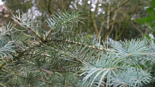 Fir Tree Green Winter Tree