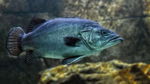 Fish Swim Water Animal Underwater