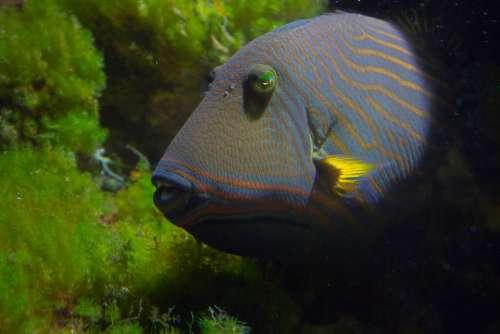 Fish Aquarium Underwater Water Sea