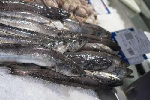 Fish Market Food Seafood Fresh Fishing Eat Meal