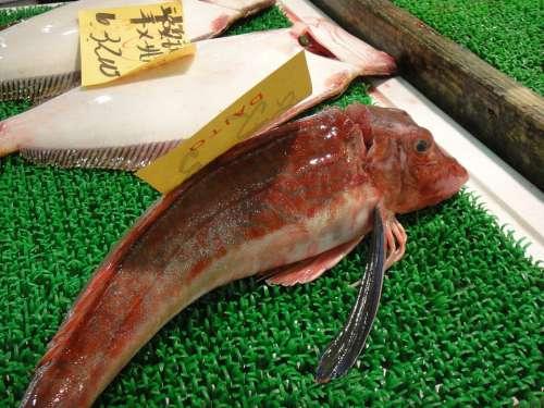 Fish Market Japan Tokyo Tsukiji Attraction