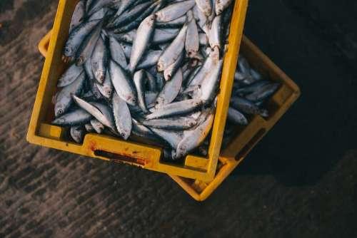 Fish Catch Box Market Fishing Food Animal Fresh