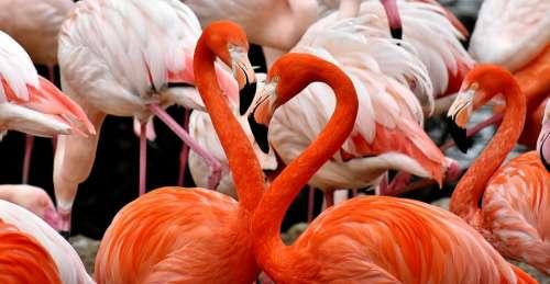 Flamingo Bird Colorful Feather Pride