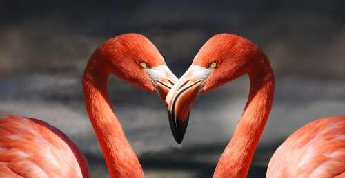 Flamingo Valentine Heart Valentine'S Day Love
