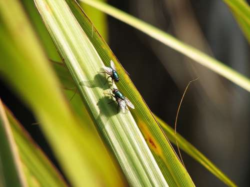Flies Nature Grass Insects Green