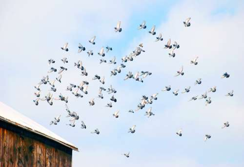 Flight Barn Animal Feather Flying Wildlife