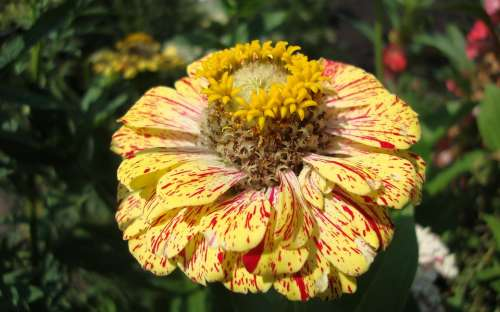Flora Fauna Macro Bokeh