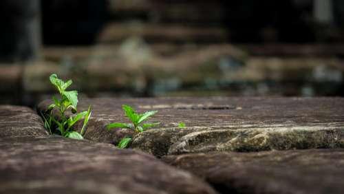 Flora Plant Green Angkor Nature Strength Powerful