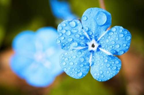 Flower Macro Forget Drip Water Rain Dew Plant