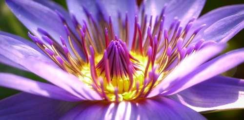 Flower Blossom Bloom Nature Purple Flower Close Up