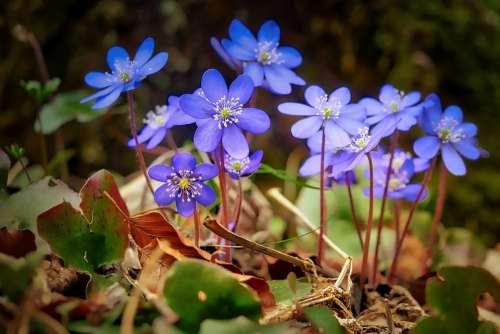 Flower Nature Plant Summer Flowers Floral Color