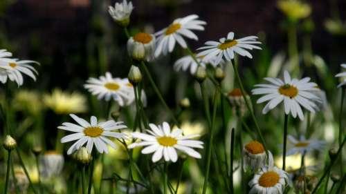Flower Garden Gaza