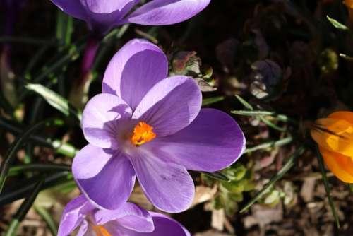 Flower Nature Plant Close Up Garden