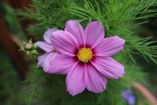 Flower Romance Nature Beauty Bouquet Spring Love
