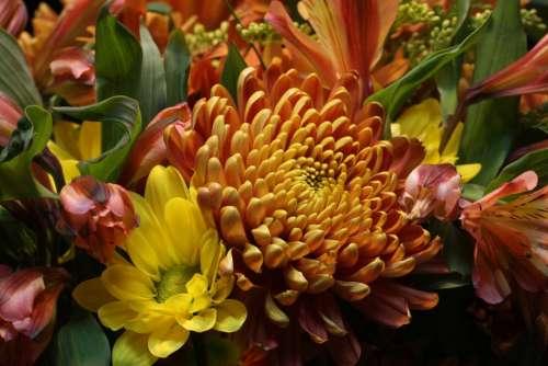 Flower Fauna Autumn Nature Flora Bloom Colorful