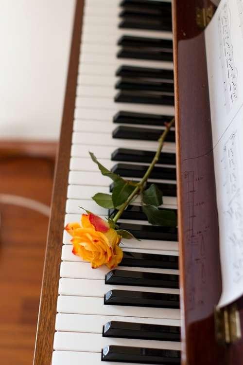 Flower Music Piano Romantic Instrument
