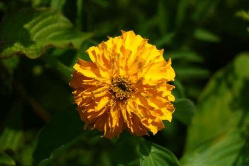Flower Yellow Green Blossom