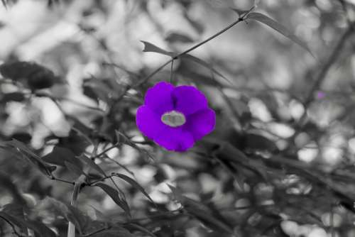 Flower Purple Lovely Silent Pure Beautiful