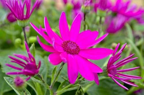 Flower Garden Summer Flora Pink Flower Garden