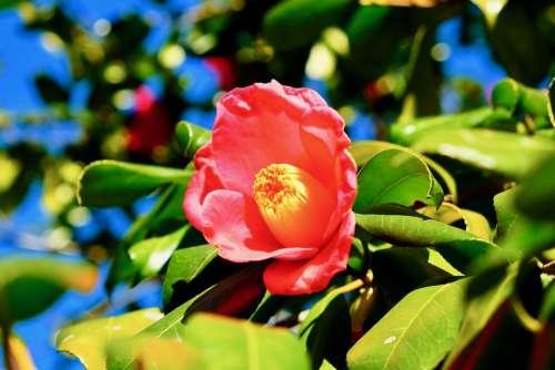 Flower Pink Blue Winter Beautiful Fine Day Lovely