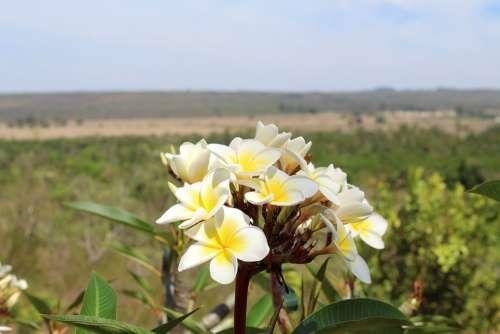 Flower Horizon Nature White