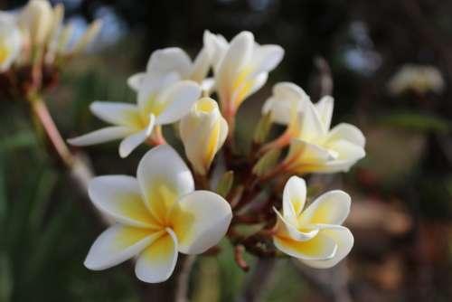 Flower White Spring Garden Flourish Botany