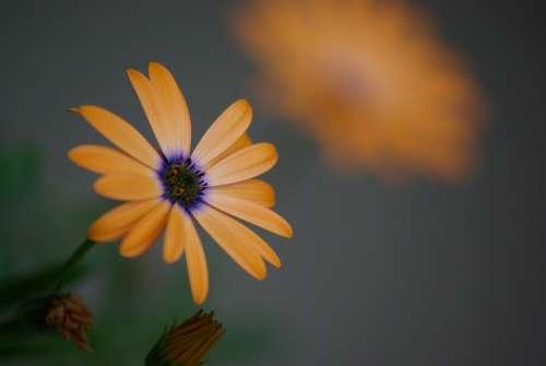 Flower Garden Floral Plant