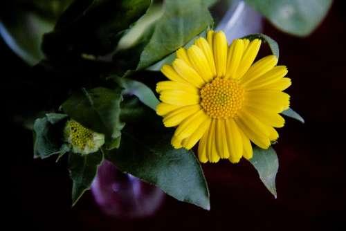 Flower Yellow Bloom Nature Spring Flora Petals