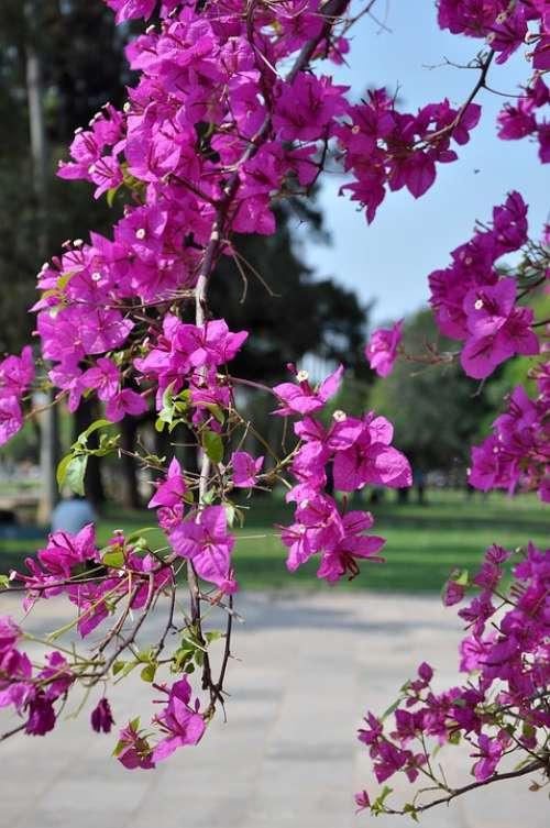 Flower Color Flowers Nature Rosa Floral Plant
