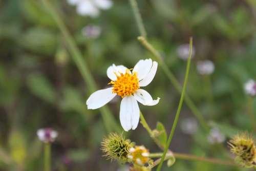 Flower Bloom Nature Plant Botany Botanical Spring