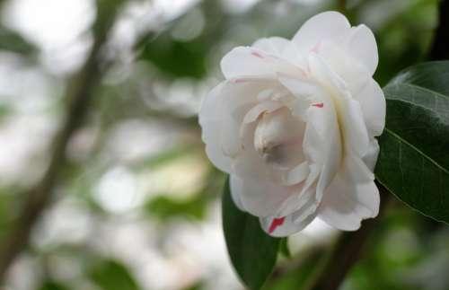Flower White Bloom Spring Flora Garden