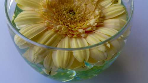 Flower Vase Decoration Glass Bloom Petals