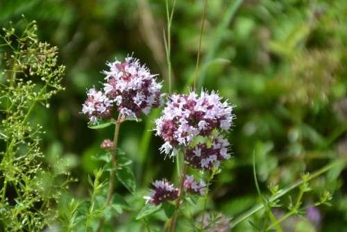 Flower Wild Flower Nature Plant Summer