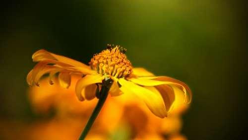 Flower Wild Flower Yellow Orange Nature Bloom