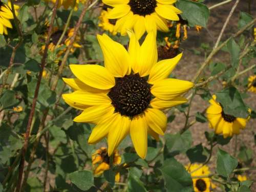 Flower Yellow Macro Nature Floral Blossom Garden