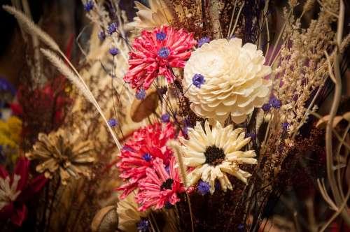 Flower Plant Decoration Photograph Flowers ·
