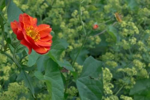 Flower Plant Red Bush
