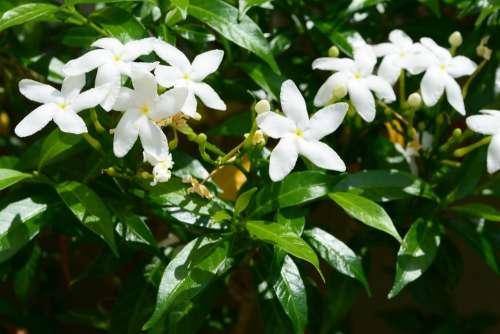 Flower White Leaf Plant Green Nature Fresh