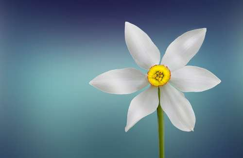 Flower White Beautiful Beauty Bloom Blooming