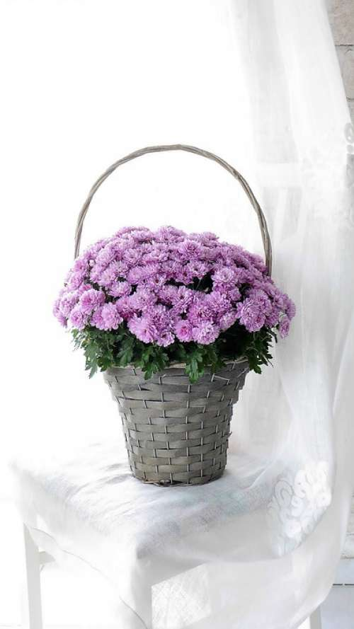 Flower Basket Autumn Flowers Asters